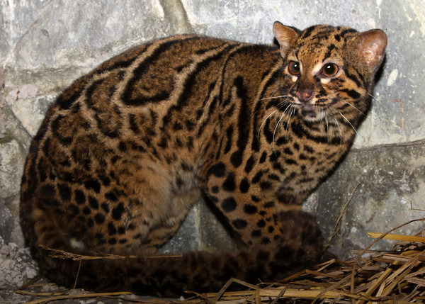 Photo Friday: Magnificent Marbled Cats (1/3)
