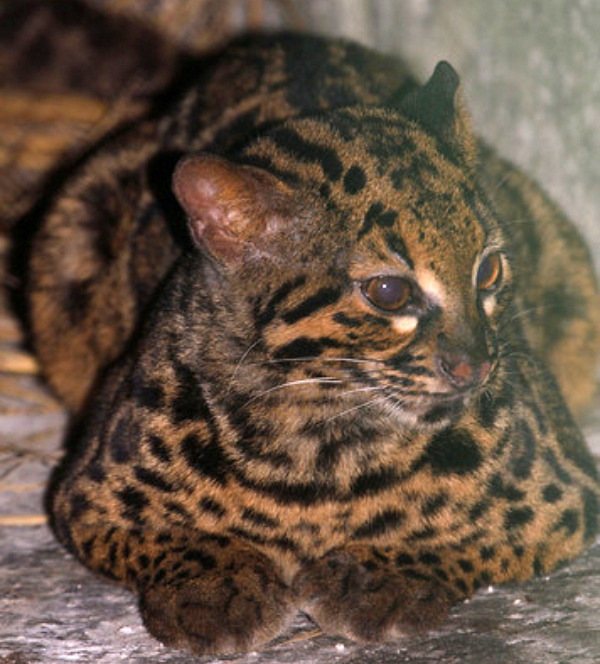 Photo Friday: Magnificent Marbled Cats (2/3)
