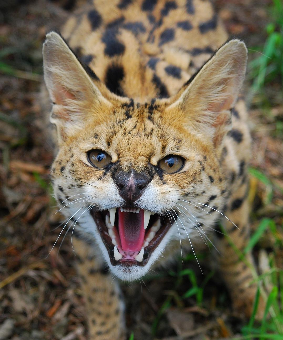 Tele-Talk | Bringing TV Talk Online